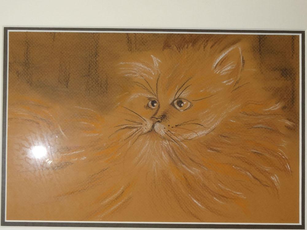 un chat-S.Chouin
